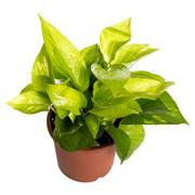 Best Horticulture Developers In Delhi Ncr
