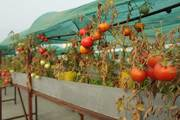 XeFarm Rooftop Organic Farming - Agriculture,  forestry