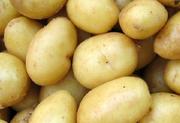 Potato Farming Techniques in India