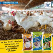 Best poultry feed manufacturing plant / mill cost